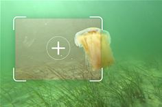 Fraunhofer IGD is developing underwater image enhancement methods based on artificial intelligence. (© Fraunhofer IGD)