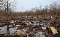 Destruição Florestal (2)