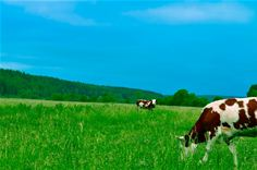 Improving pasture productivity and quality
