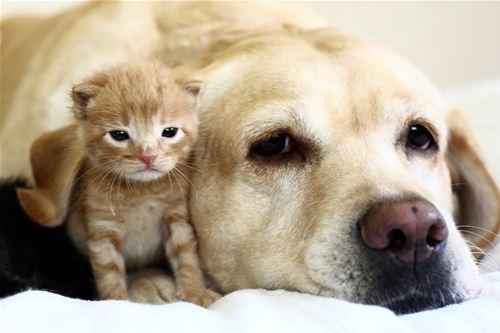 World's biggest pet insurer streamlines UK claims processing