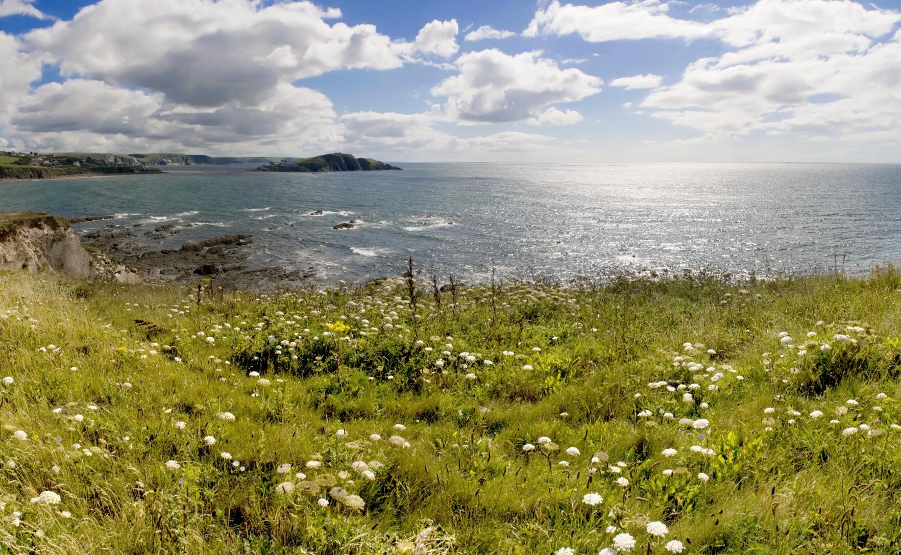 Devon Coast Realwire Realresource